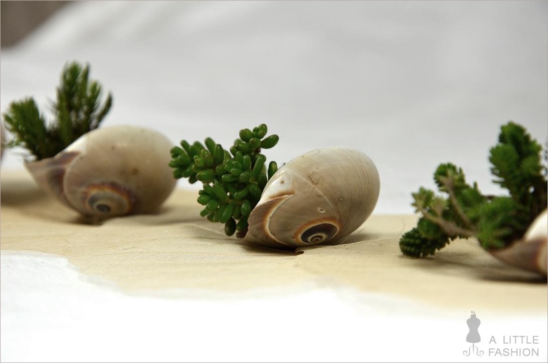 Kleine Gewächshäuser: Sukkulenten in Schneckenhäuschen