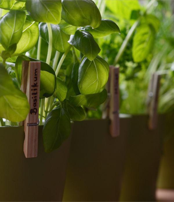 [DIY] Kräuterklammern – Pflanzenstecker mal anders