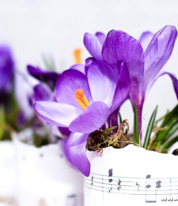 DIY Blumentöpfe aus Dosen und Papier
