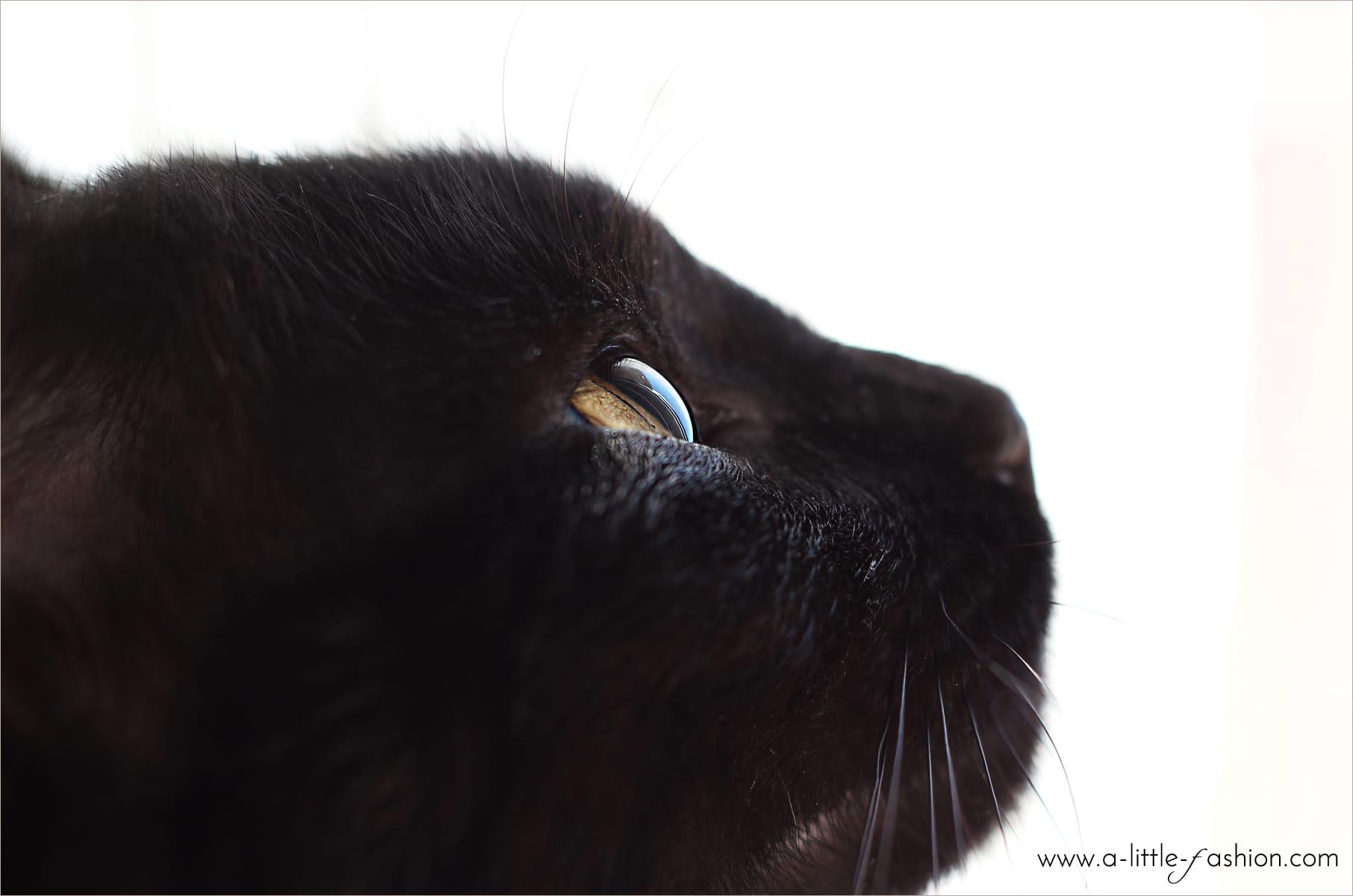 Tipps und Tricks zur Entfernung von Katzenhaaren