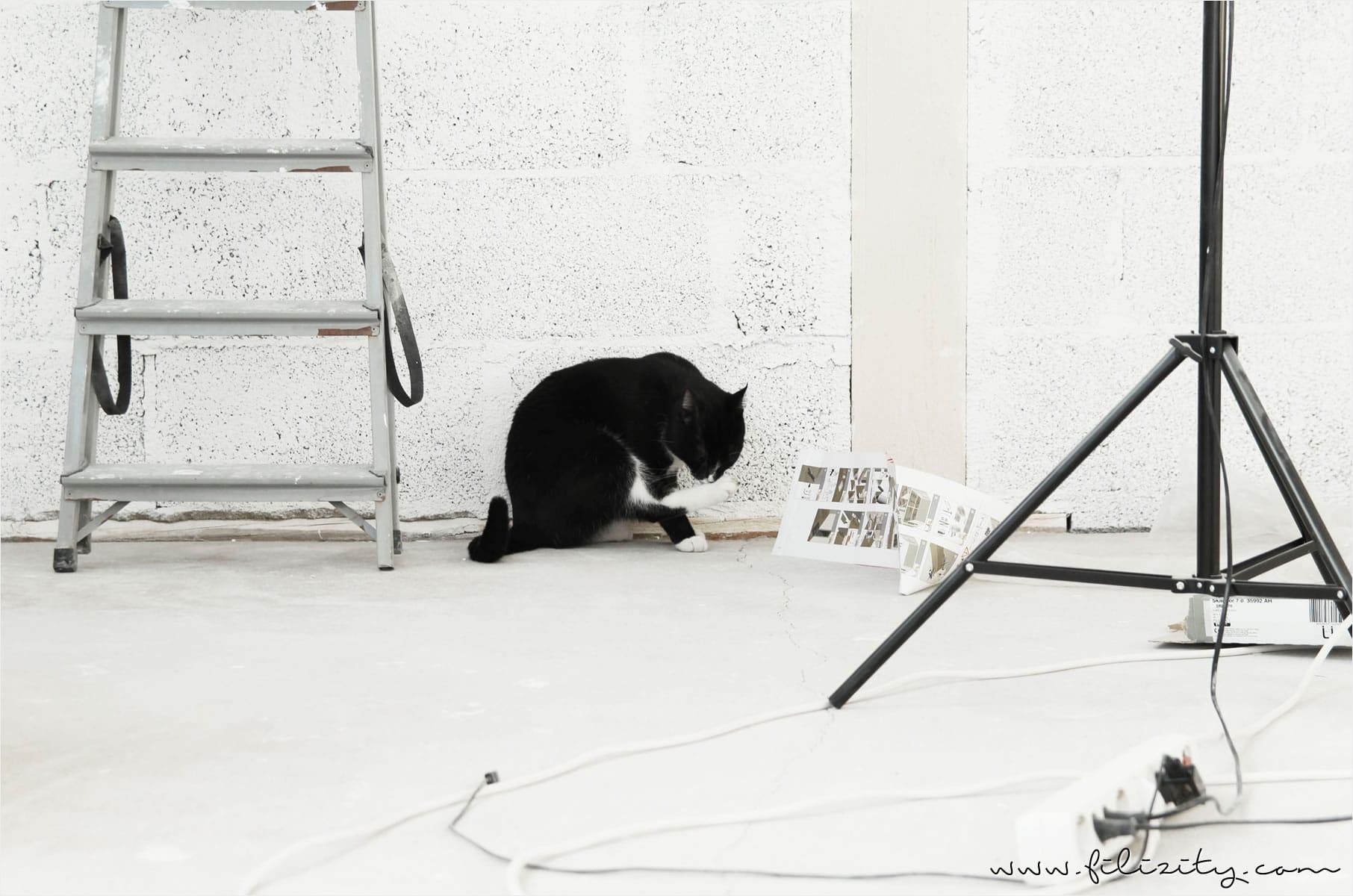 Traum-Arbeitsplatz: Mein eigenes Foto-Studio