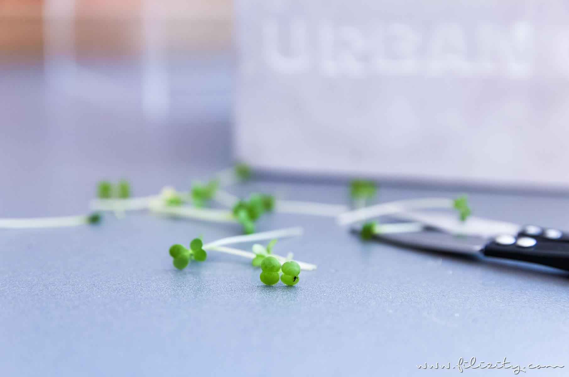 Mini-Spargel-Quiches - Urban Gardening mit frischen Kräutern | Filizity.com | Food-Blog aus dem Rheinland #frühling #spargel