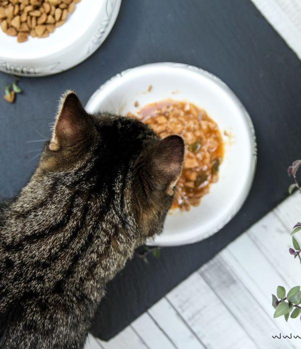 Tagebuch einer Katze mit Purina ONE + Gewinnspiel