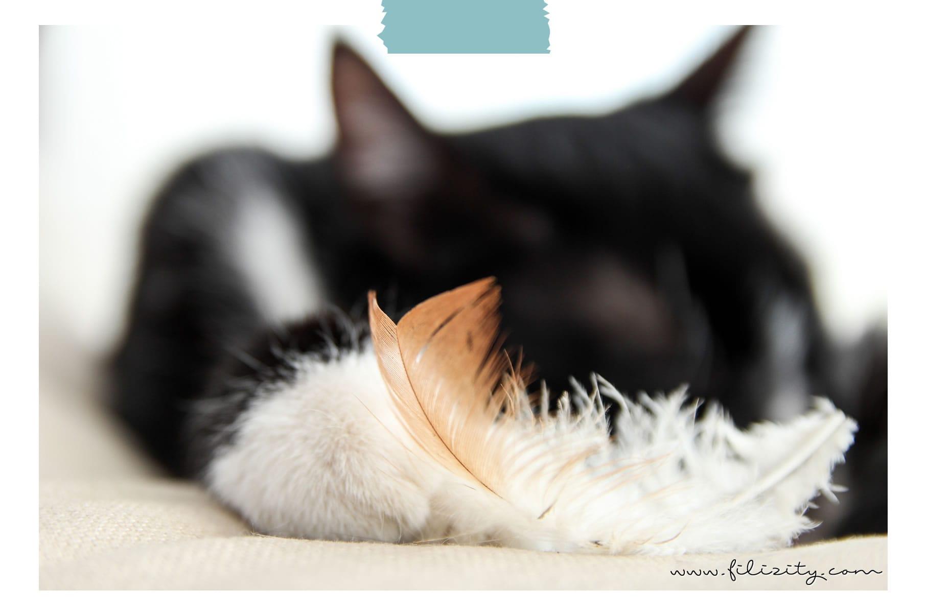 Tagebuch einer Katze mit Purina ONE | Nass- und Trockenfutter-Umstellung